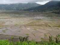 Stern-Reisfelder