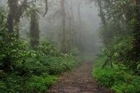 Monteverde Nebelwald Reservat