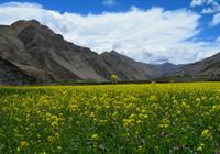 Tibet Tingri