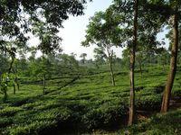 Srimangal, Bangladesch