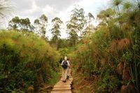 Kibale Forrest