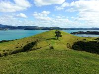 NZ_bay of island_Wiese_NL_FOC