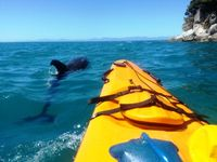 NZ_Abel Tasman NP_Delphin_NL_FOC