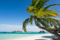 MV_Paradise Island Resort_NL_FOC