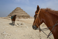 EG - Djoser Pyramide mit Pferden
