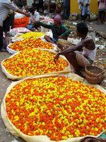 INDA_Kalkutta_Blumenmarkt_ES_FOC