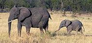 Rundreise Tansania & Sansibar mit Kindern, 21 Tage